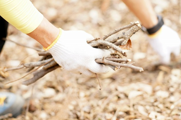 焚き火で薪を拾うとき知っておきたい7つの手順