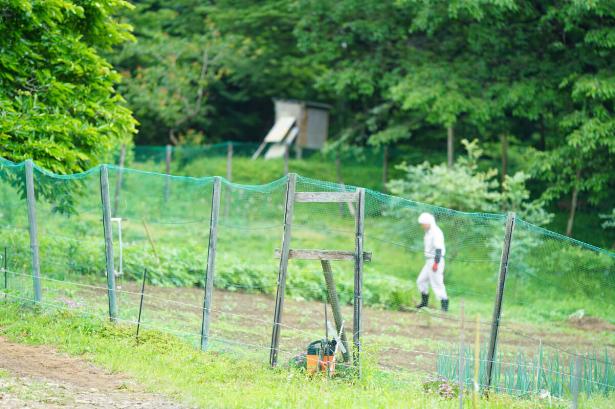 地元生産者「福嶋さんの畑」とれたて無農薬野菜 収穫体験